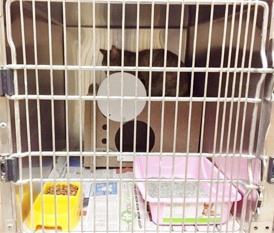 Feral Cat Room