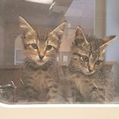 Kittens at shelter