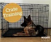 indoor crate training