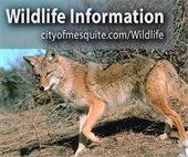 Mesquite wildlife information
