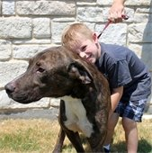 boy hugs dog adopted from mesquite animal shelter
