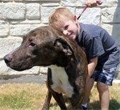 mesquite animal shelter dog adopted