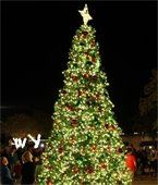 Lit Christmas tree in Downtown Mesquite