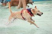 Doggie splash day