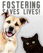 fostering lives