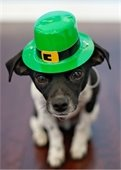March pet adoption specials