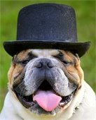 derby dog day