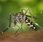 mosquito spray education