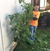Young volunteer removing tree limbs from front yard of a home
