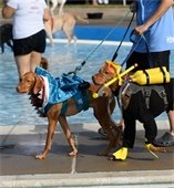 Two dogs in costume for  Doggie Splash Day