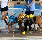 dogs dressed up in costume for doggie splash day