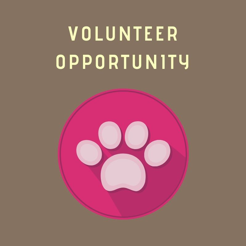 volunteer opportunity (MAS)
