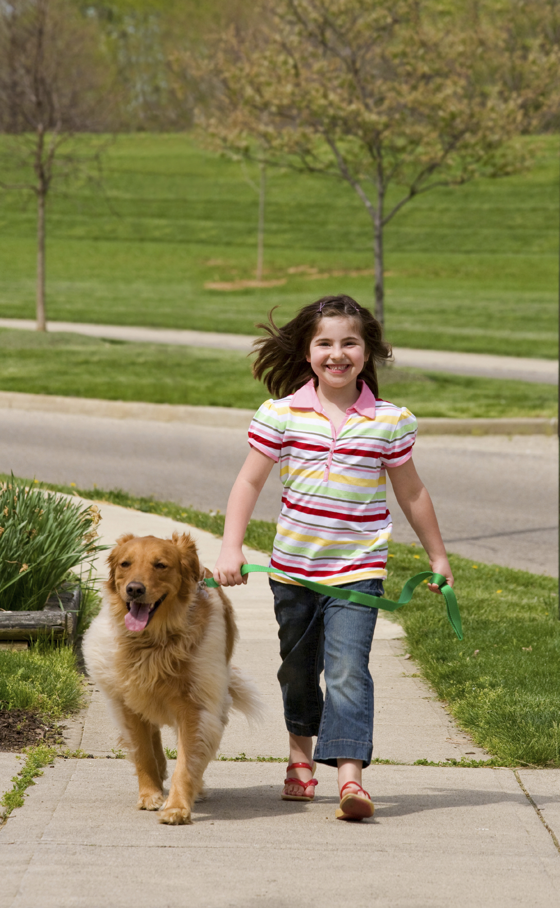Little Girl Walking Dog - Stock Image