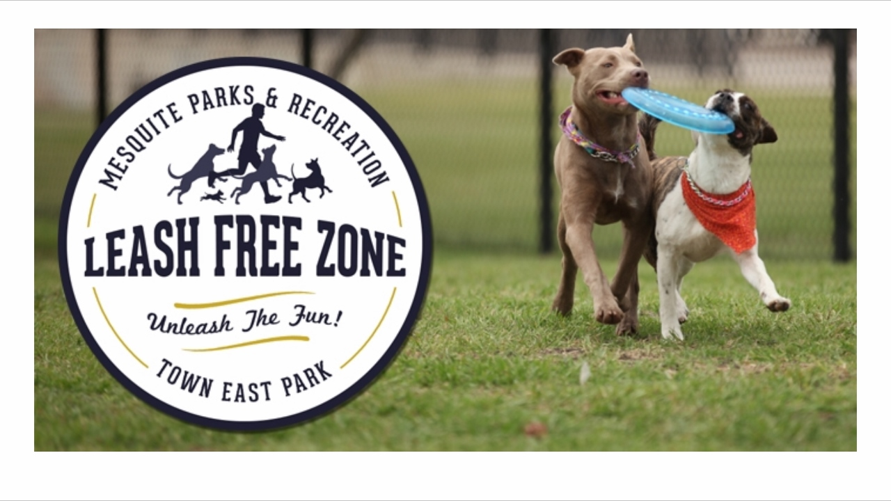 Leash free zone