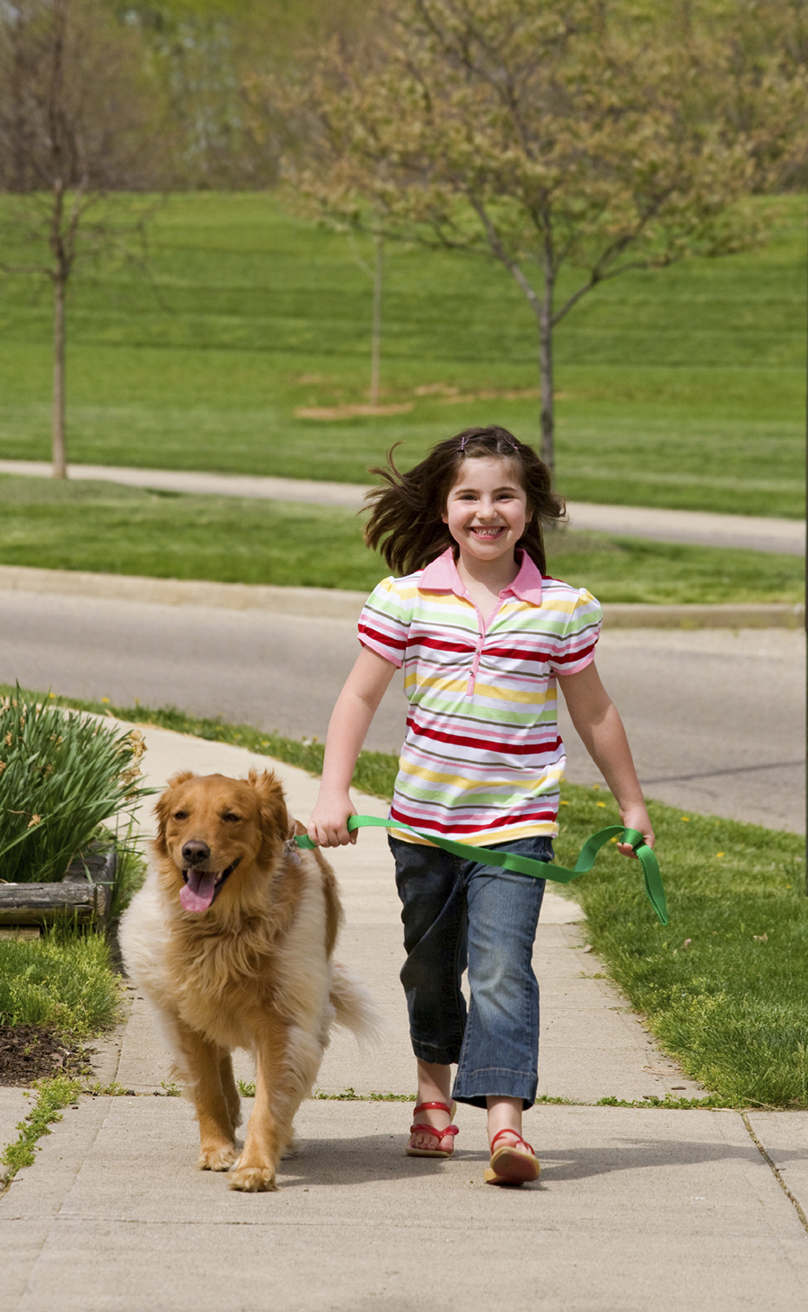 Little Girl Walking Dog - Stock Image 3x4.jpg