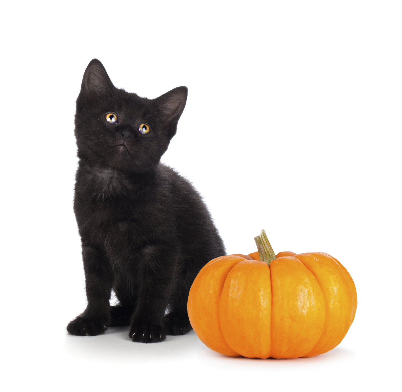 Mesquite-Halloween Pet Adoption Special.jpg